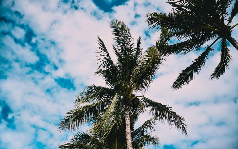 palm wallpaper 140
